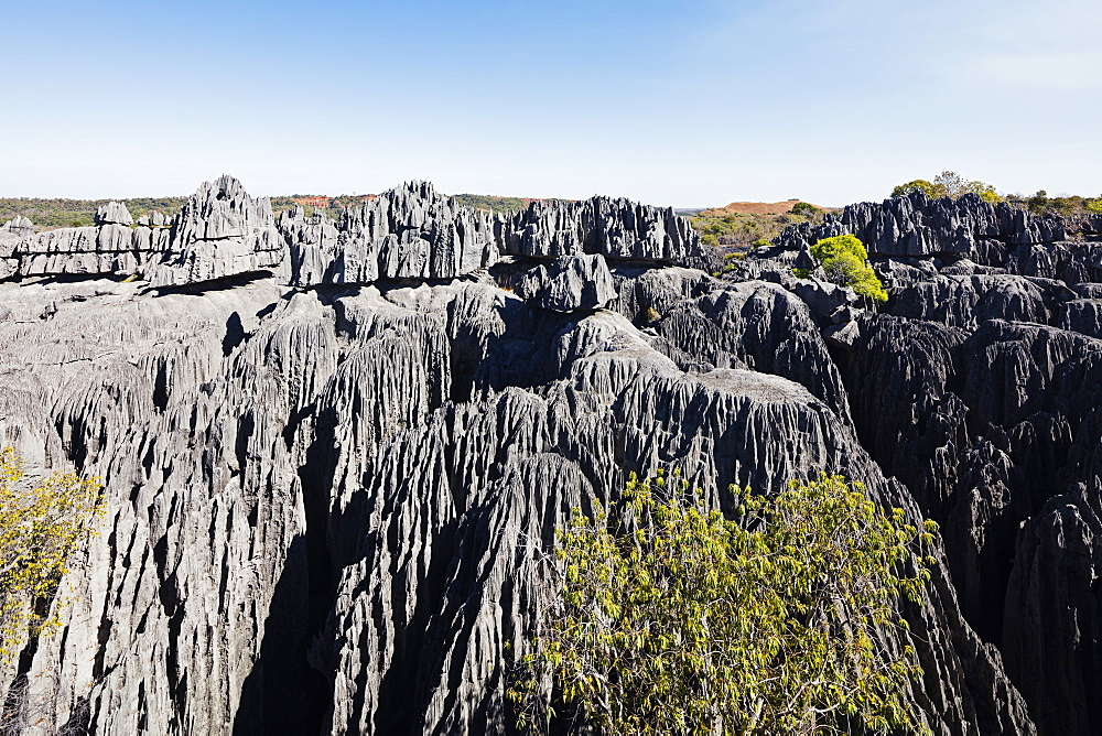 Grand Tsingy, Tsingy du Bemaraha National Park, UNESCO World Heritage Site, western area, Madagascar, Africa