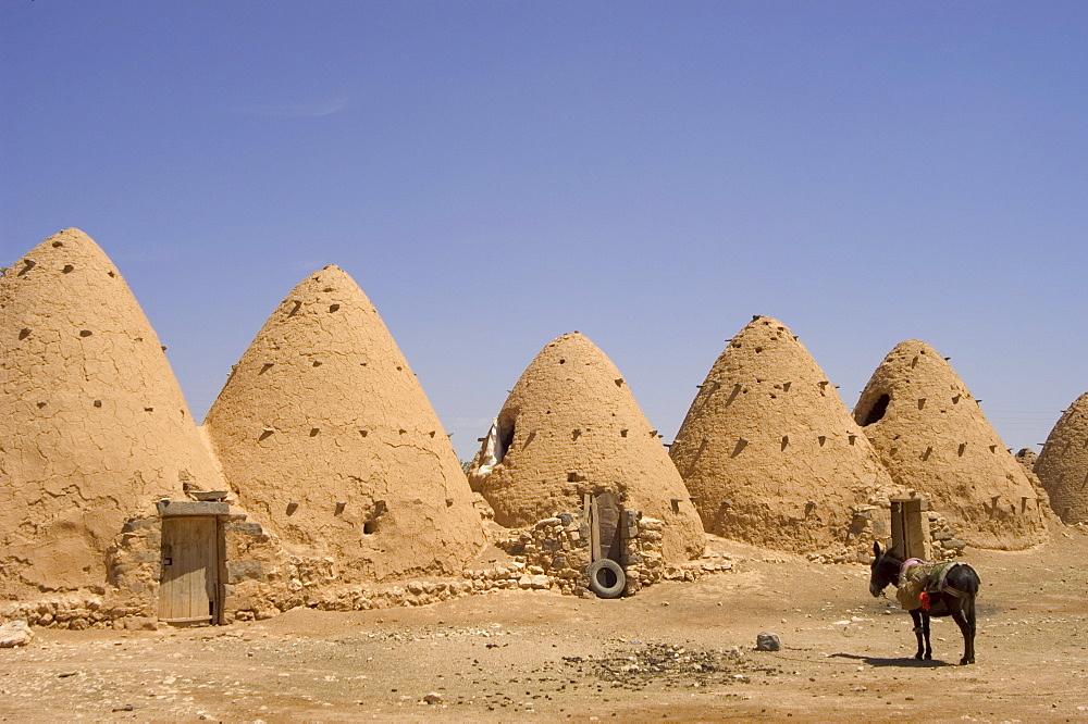 Donkey beside beehive houses built of brick and mud, Srouj village, Syria, Middle East