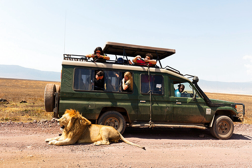 Tourists on a game drive watching a lion (Panthera leo), Ngorongoro Crater Conservation Area, UNESCO World Heritage Site, Tanzania, East Africa, Africa