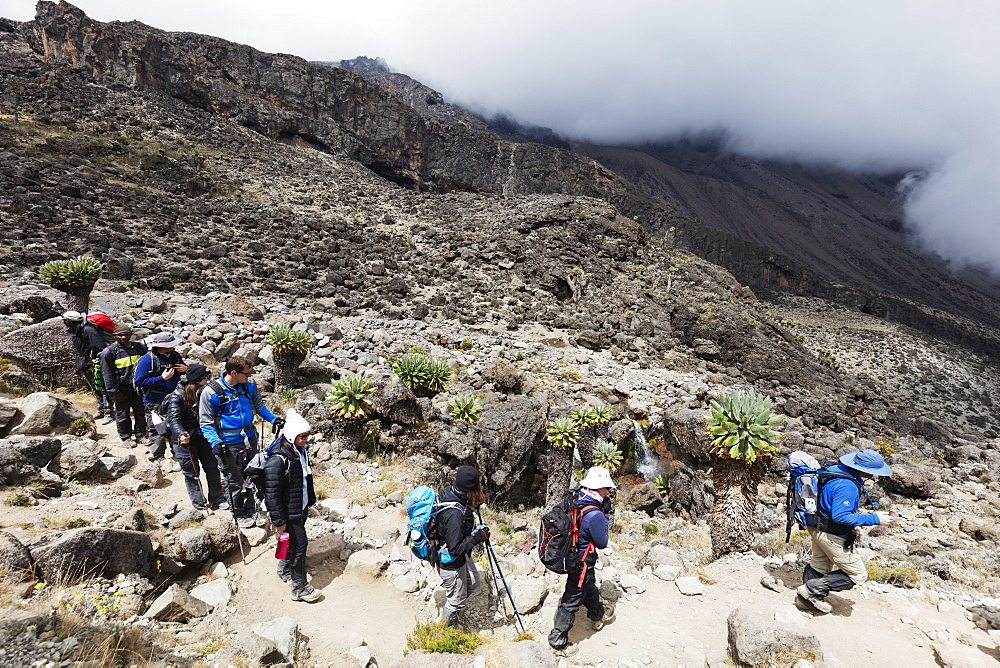 East Africa, Tanzania, Kilimanjaro National Park, Unesco World Heritage site, hikers on a trail
