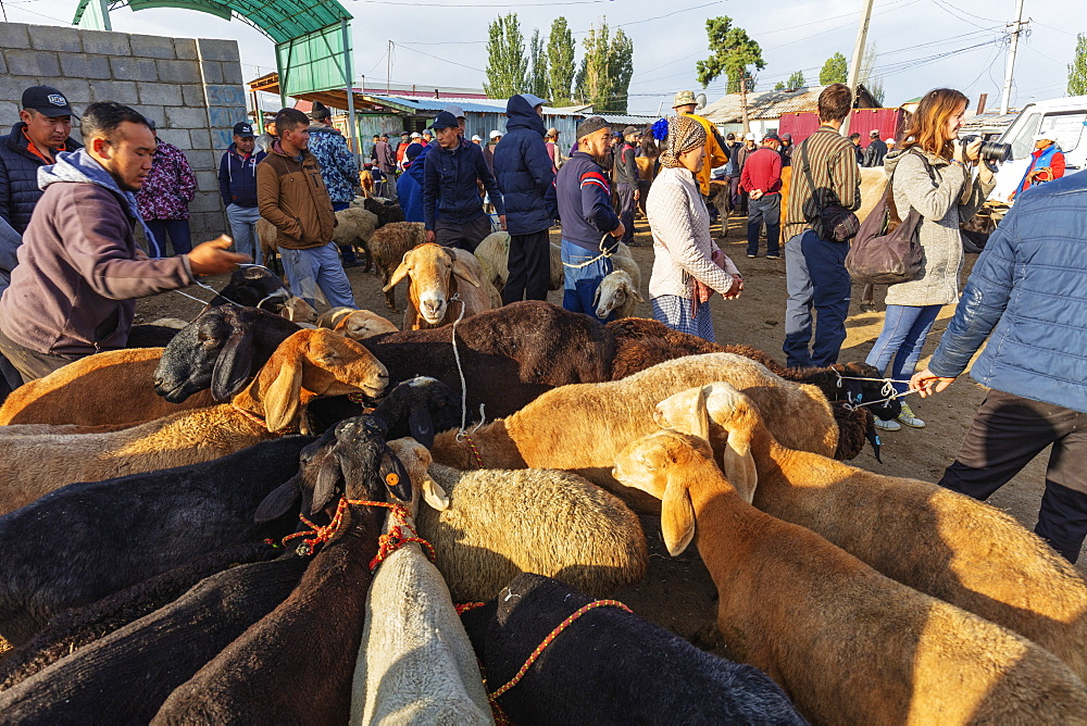 Sunday animal market, Karakol, Kyrgyzstan, Central Asia, Asia