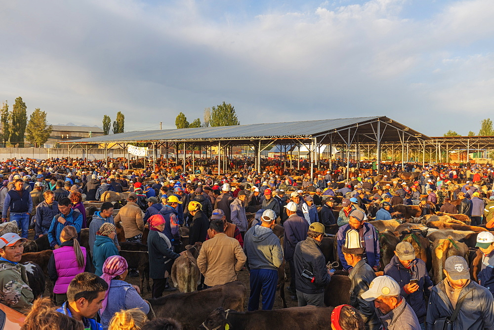 Central Asia, Kyrgyzstan, Karakol, Sunday animal market - 733-8074
