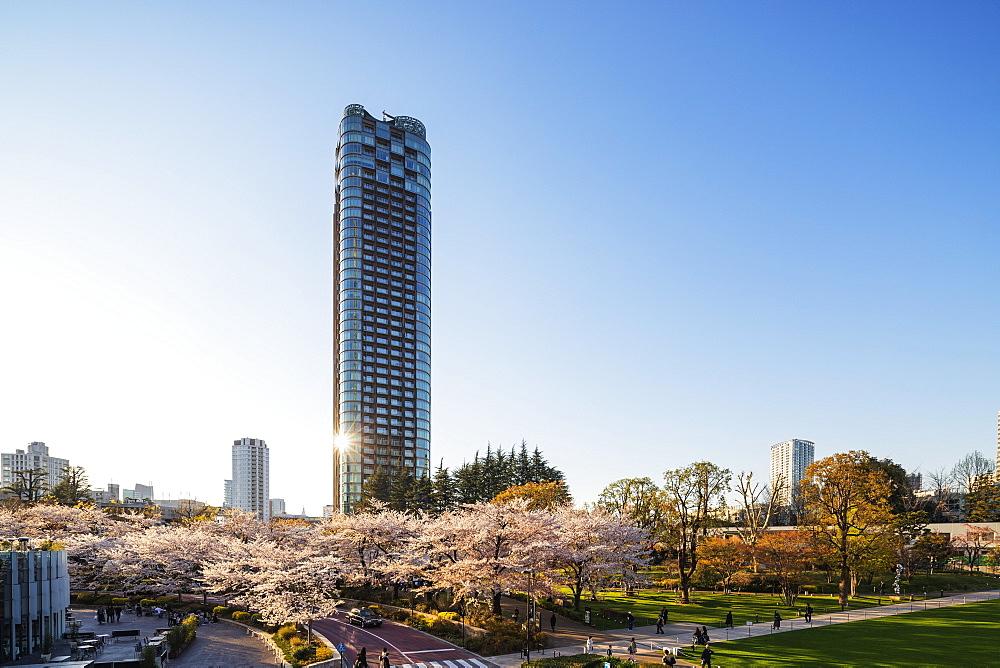 Spring cherry blossom, Roppongi, Tokyo Mid Town, Tokyo, Japan, Asia