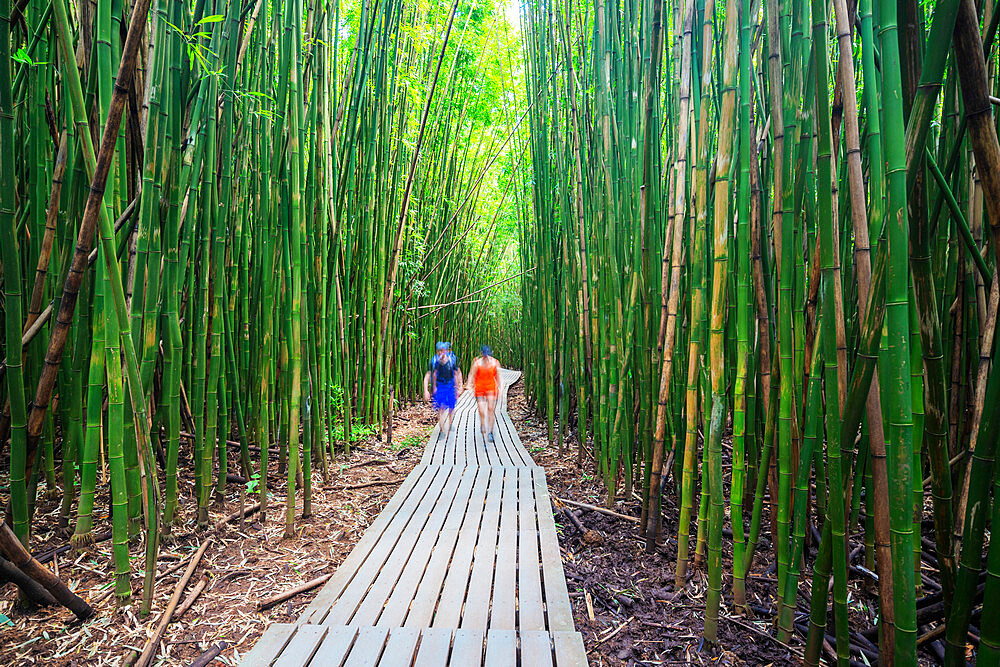 United States of America, Hawaii, Maui island, Haleakala National Park, hikers on Pipiwai trail, bamboo forest