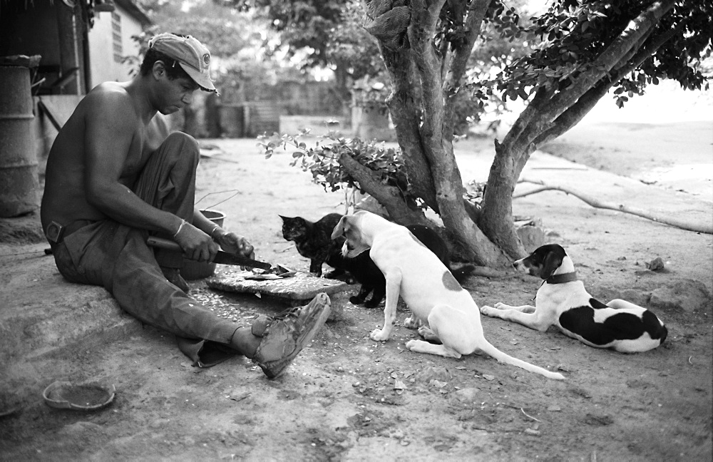 Man preparing breakfast, watched by dogs and a cat, Medina, Venezuela, South America