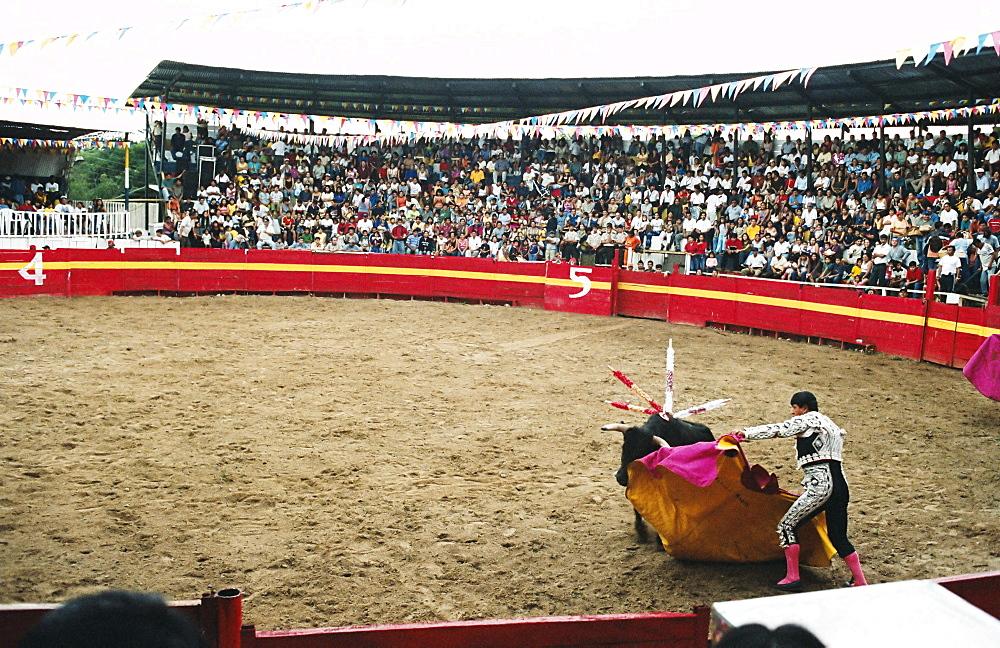Bull fighting, Tena, Ecuador, South America
