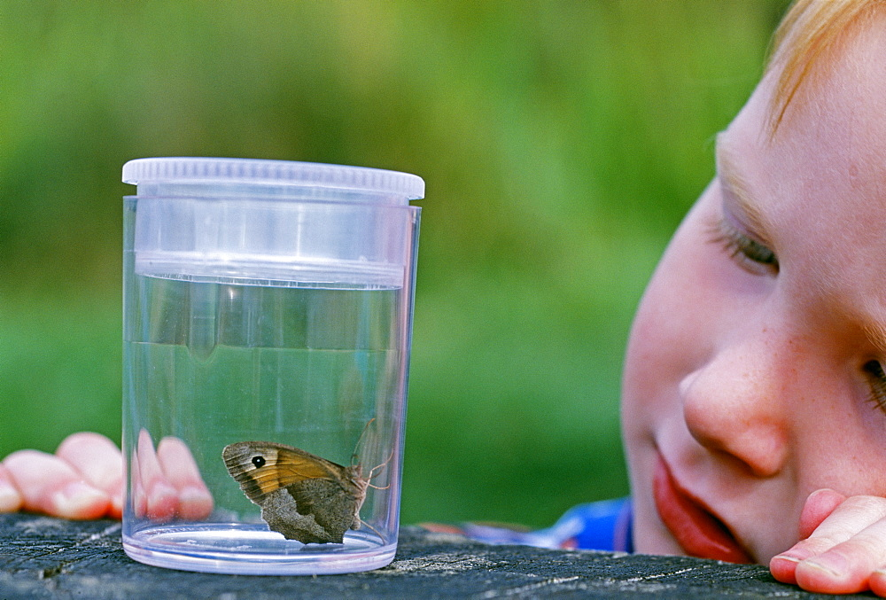 Young boy looking at butterfly, Kent, England, United Kingdom, Europe - 738-103