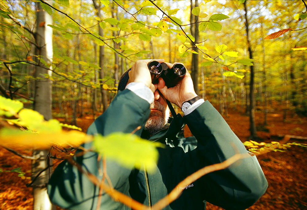Birder in woodland in autumn, United Kingdom, Europe