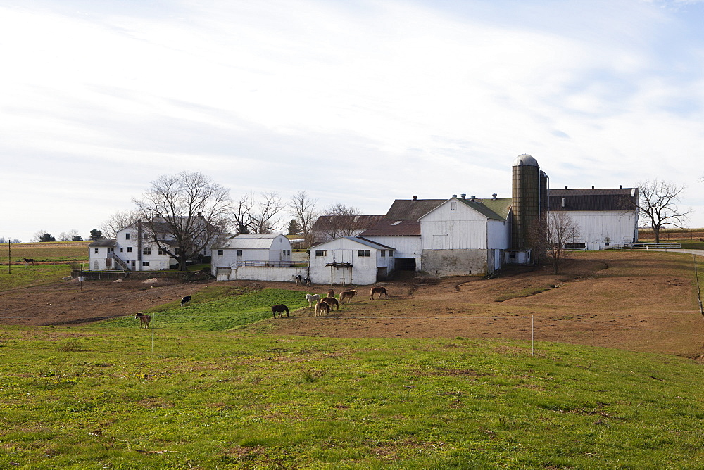 An Amish Farm, Pennsylvania, United States of America, North America