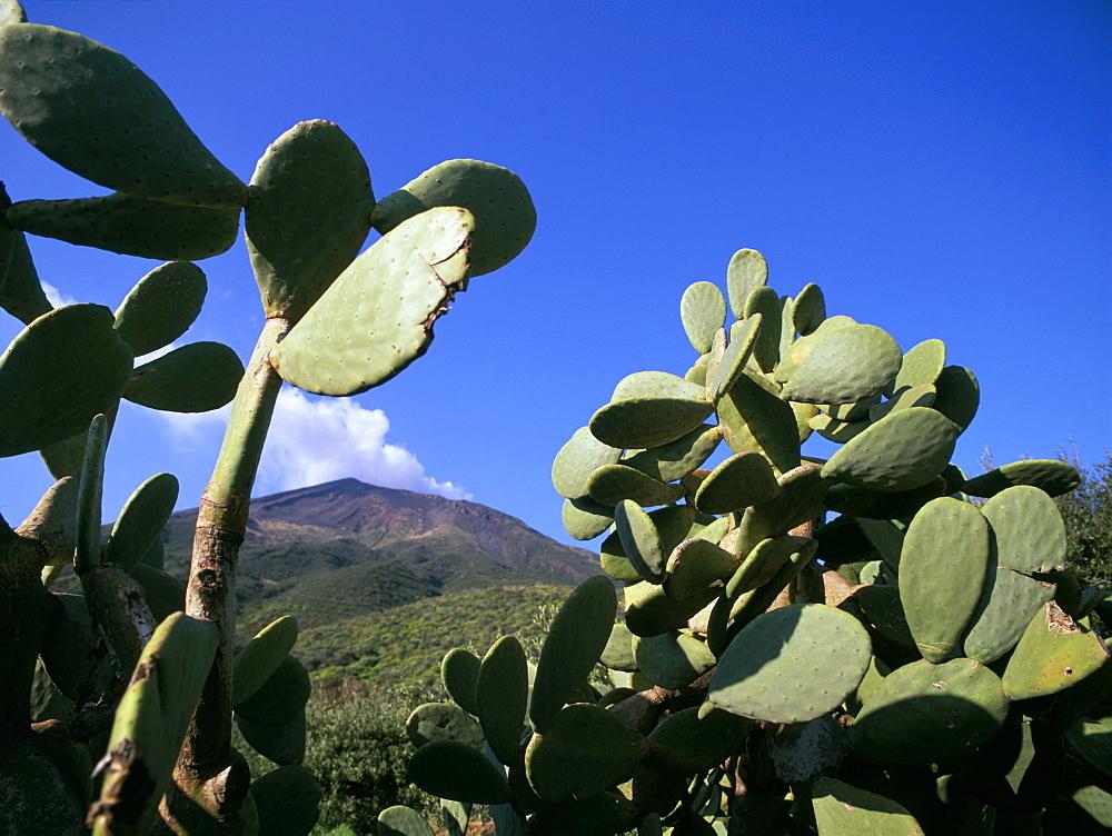 Cacti, Stromboli Island, Eolian Islands (Aeolian Islands), UNESCO World Heritage Site, Italy, Mediterranean, Europe