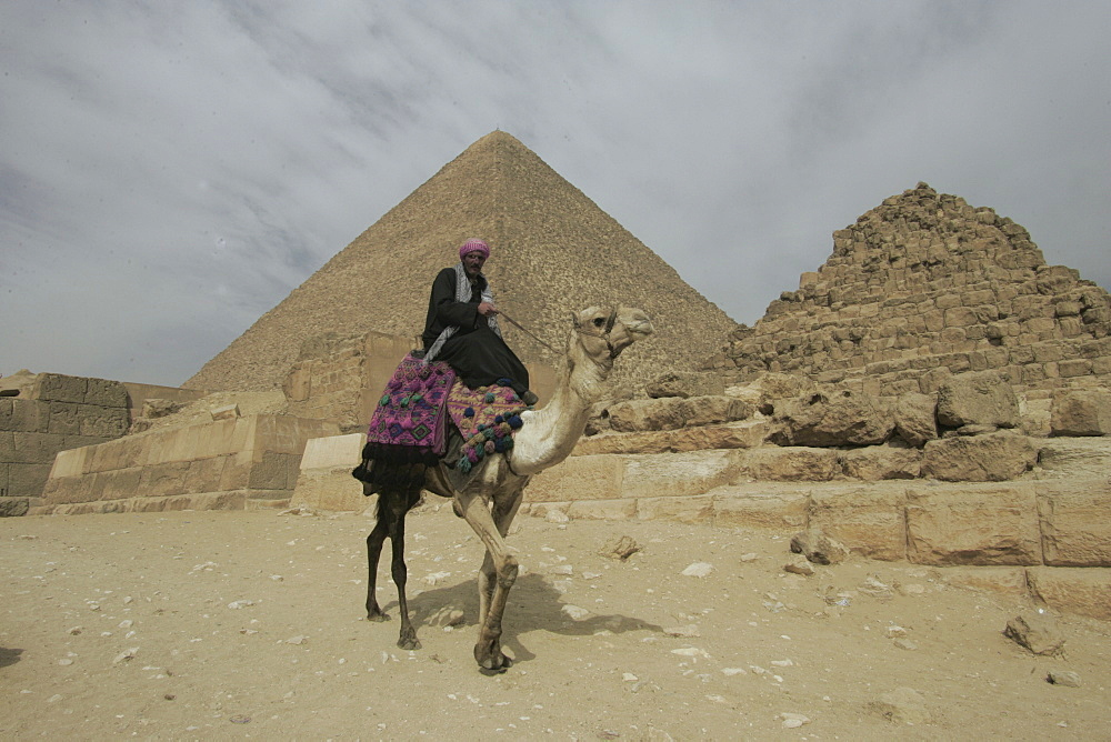 A Bedouin with his camel, by the Giza pyramids, UNESCO World Heritage Site, Egypt, North Africa, Africa