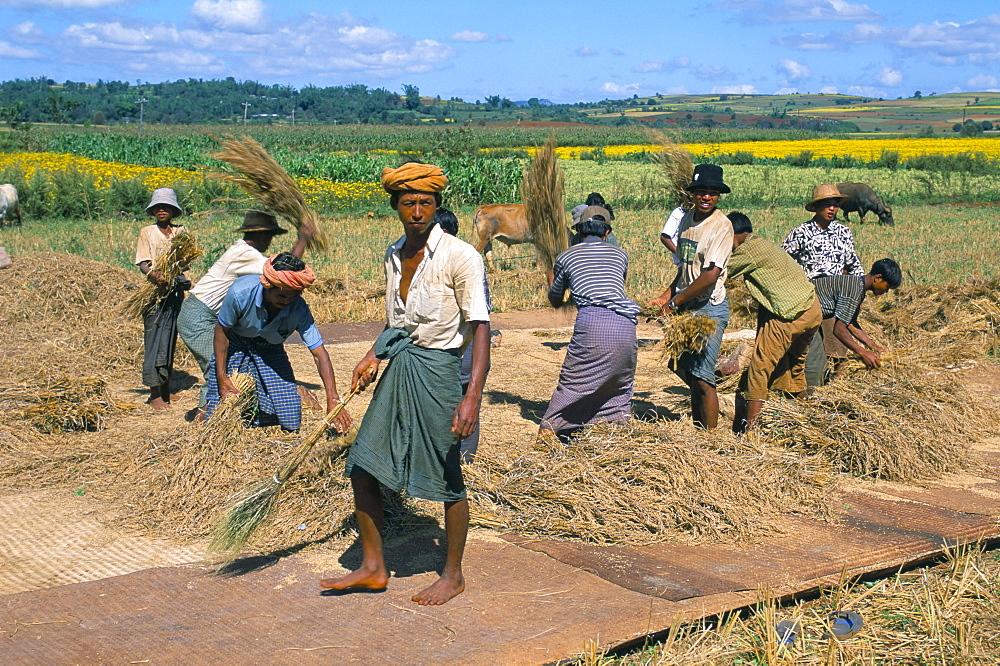 Farm workers, road to Pindaya, Shan State, Myanmar (Burma), Asia