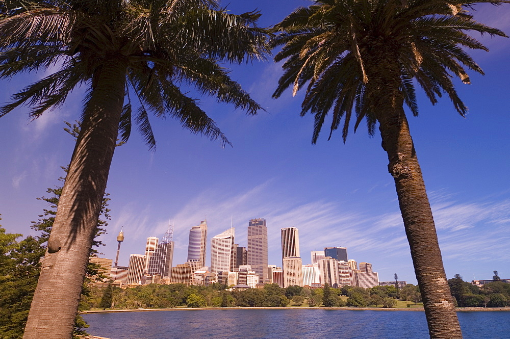 Palm trees and city skyline, Sydney, New South Wales, Australia, Pacific