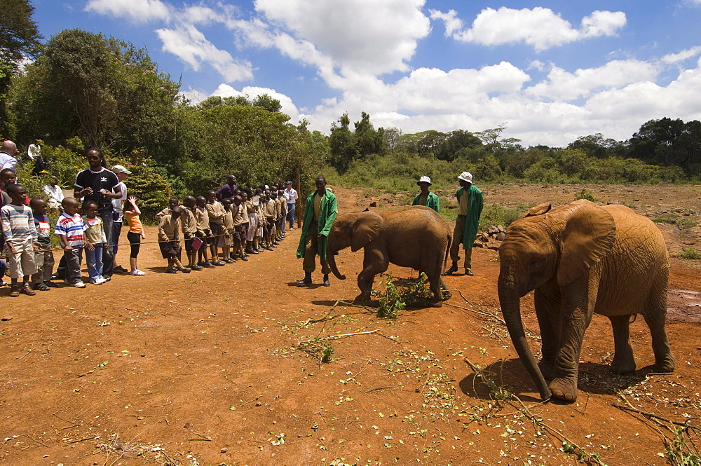 David Sheldrick Wildlife Trust, Elephant Orphanage, Nairobi, Kenya, East Africa, Africa