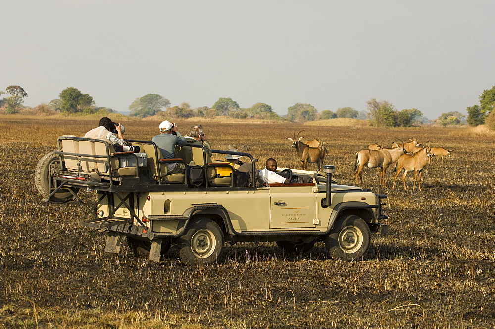 Roan antelope and safari vehicles, Busanga Plains, Kafue National Park, Zambia, Africa