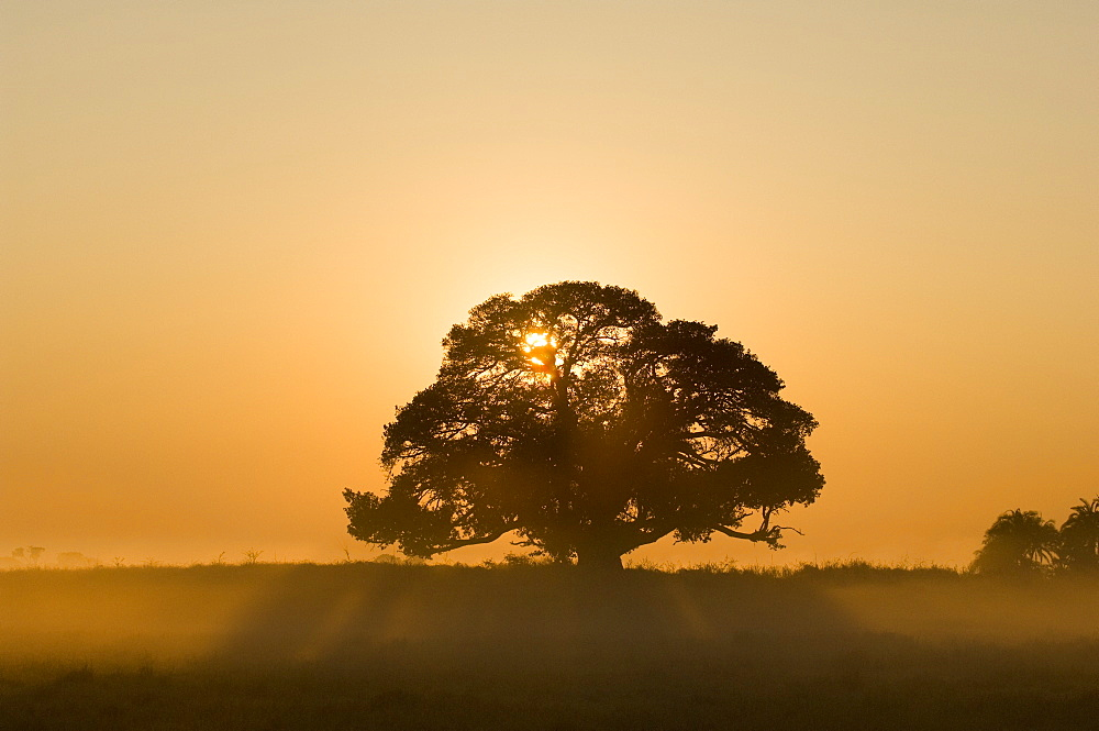 Sunrise, Busanga Plains, Kafue National Park, Zambia, Africa