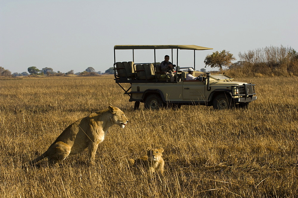 Tourist taking pictures of lioness and cub, Busanga Plains, Kafue National Park, Zambia, Africa