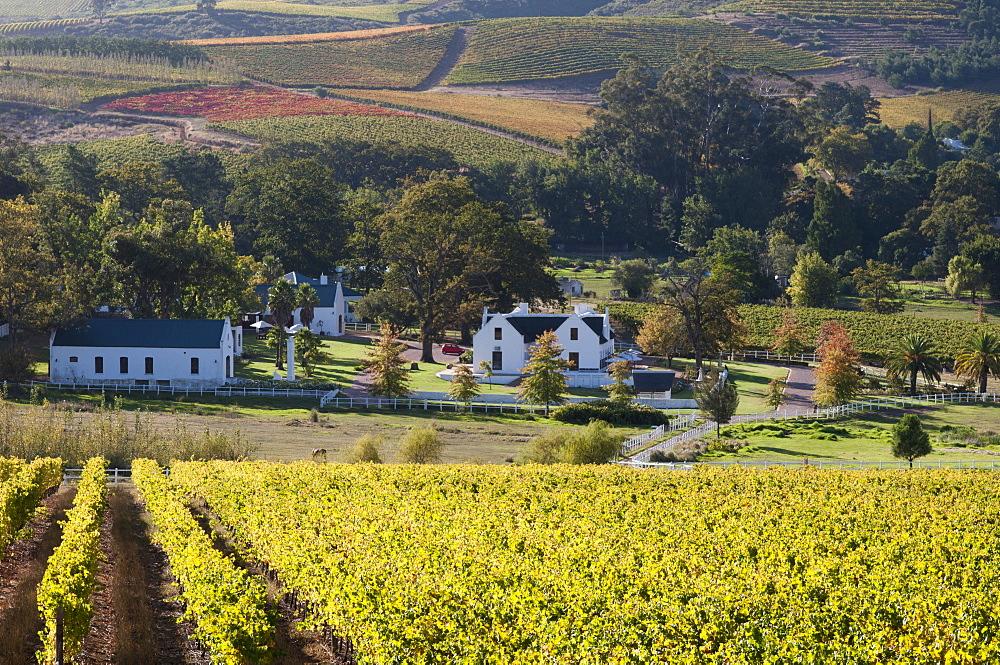Zorgvliet Wine Estate, Stellenbosch, Cape Province, South Africa, Africa - 741-3710