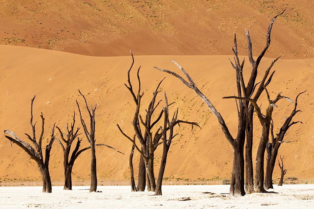 Dead trees, Deadvlei, Sossusvlei, Namib Naukluft Park, Namib Desert, Namibia, Africa