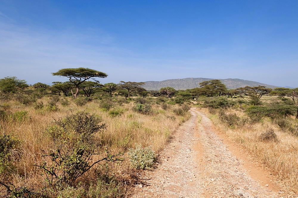 Samburu National Reserve, Kenya, East Africa, Africa