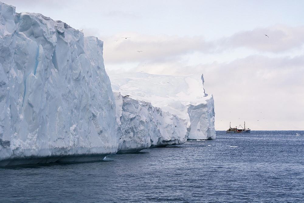 Icebergs in Ilulissat icefjord, UNESCO World Heritage Site, Greenland, Denmark, Polar Regions