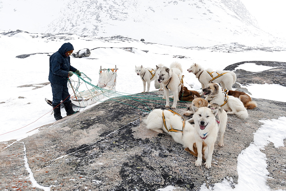 Dog sledge, Greenland, Denmark, Polar Regions