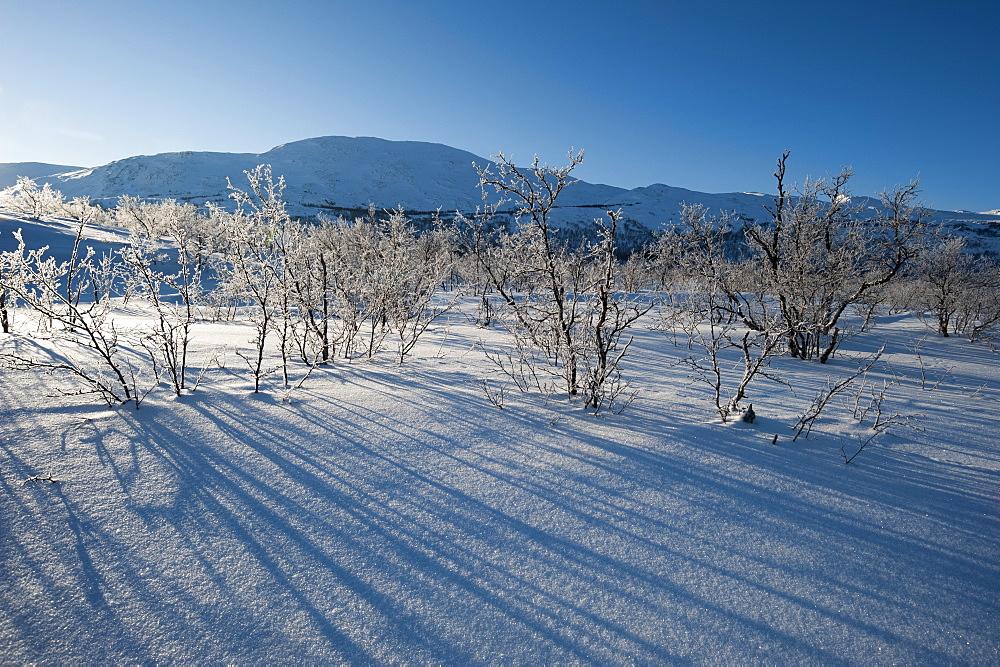 A frozen landscape near Kiruna, Sweden. - 741-5208