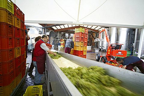 Bellavista winery, Erbusco, Franciacorta, Lombardy, Italy.