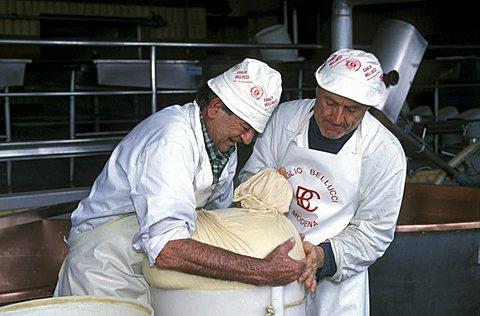 Preparation of Parmiggiano Reggiano cheese, Hombre dairy, Cittanove, Emilia Romagna, Italy