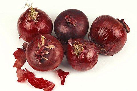 Onion, Italy