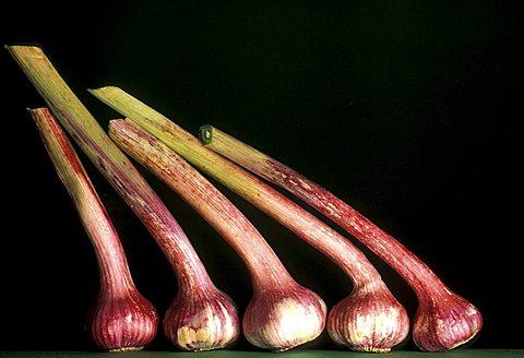 Allium Sativum, Garlic, Italy