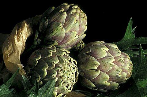 Cynara Scolymus, Artichoke, Italy