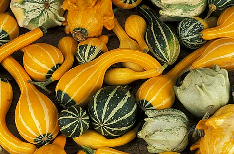 Courgettes, Italy