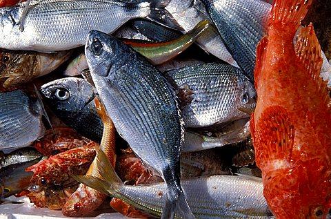 Fish and Granceola (Maja squinado), Isola Del Giglio, Toscana, Tuscany, Italy