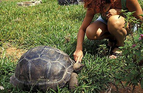 Turtles, Seychelles, Indian Ocean, Africa