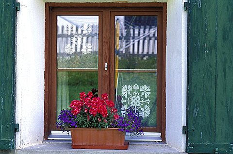 Flower pot with Lobelia and Antirrhinum on window