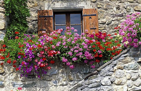 Windows with petunias and pelargonium