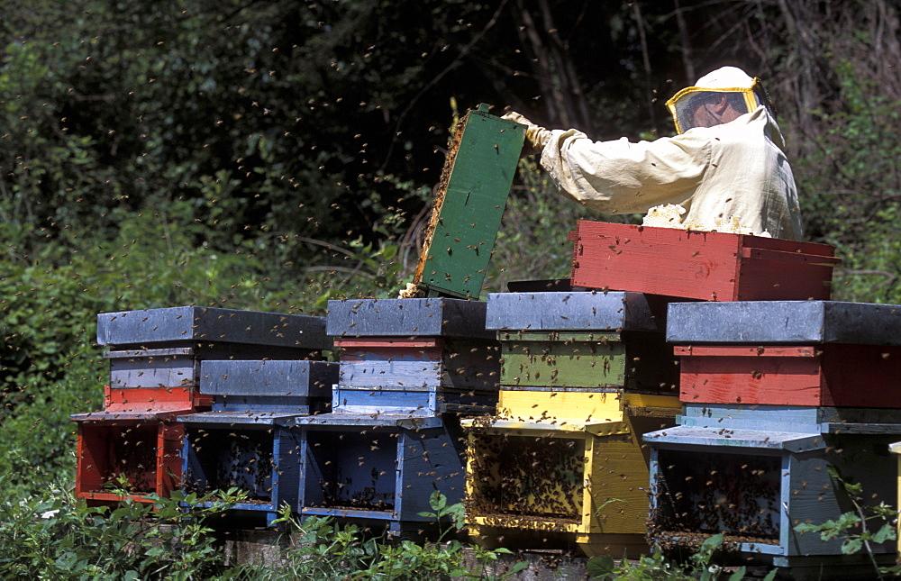 Girardelli beekeeping, Mori, Trentino Alto Adige, Italy