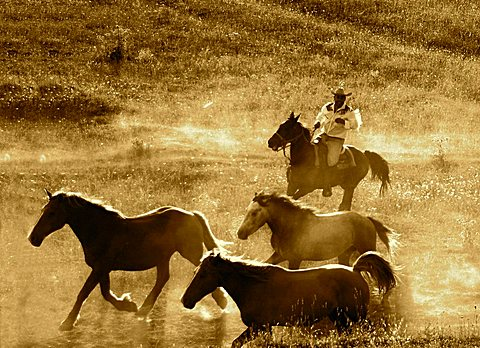Horses, Ovindoli, Abruzzo, Italy