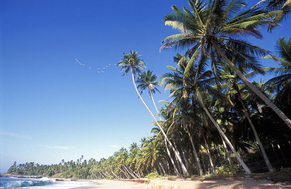 Beach, Amanwella Hotel, Tongalle, Sri Lanka, Asia