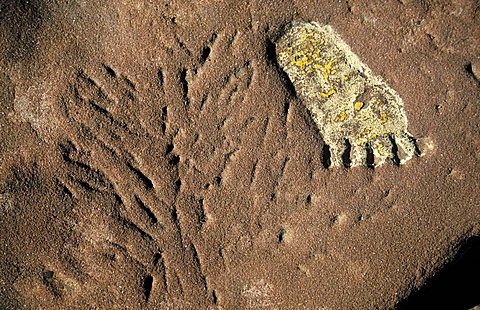 Footprint, Arches national park, Utah, United States of America, North America