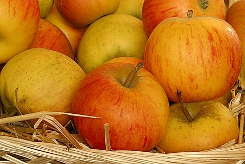 "Apples ""Regina delle Renette"", Italy"
