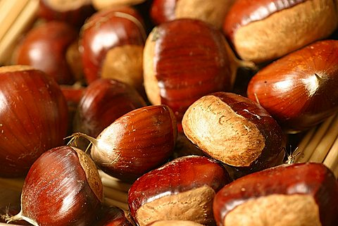 "Chestnut ""Maraval"", Italy"