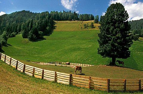 Grazing land, Val Pusteria, Trentino Alto Adige, Italy