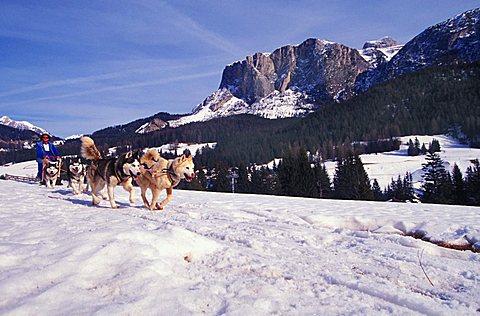 Sleddog, Alta Badia, Trentino Alto Adige, Italy