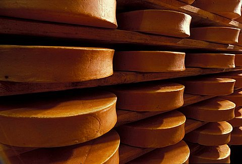 Fontina cheese, Gressoney, Valle d'Aosta, Italy