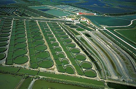 Aerial view of delta of the Po near Porto Tolle, Veneto, Italy