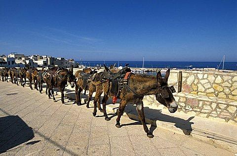 Mules to ride to hill, Marettimo island, Egadi islands, Sicily, Italy