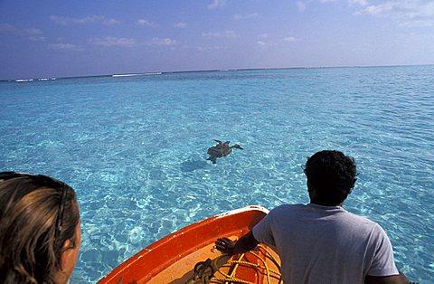 Turtle, Laccadive islands, India, Asia