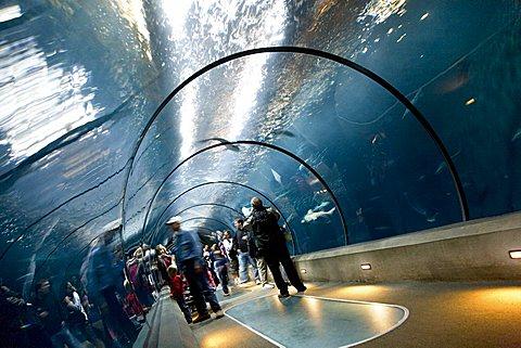 Newport Aquarium, Oregon, United States of America (U.S.A.), North America